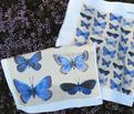 Rrrbutterflies3c_comment_177864_thumb