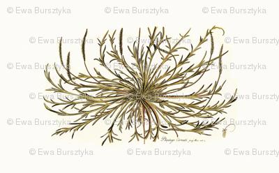 botanical pillow panel 1
