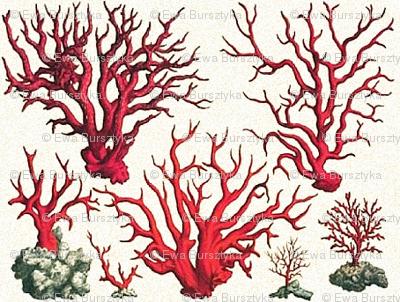 vintage corals