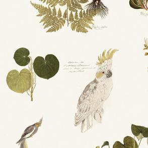parrots and botanicals