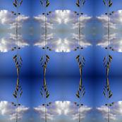 Cloudy Grass