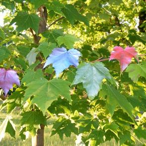 Spray Painted Maple Leaves