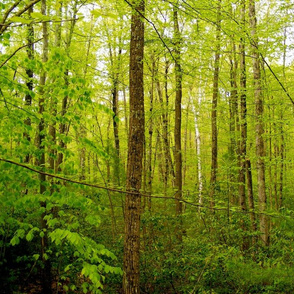 Northeast Spring Greens Deciduous Forest