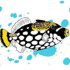 Clown Triggerfish Blue Spatter
