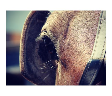 Rrramish_horse_blinders_shop_preview