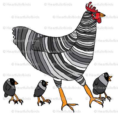 Barred Rock Chickens