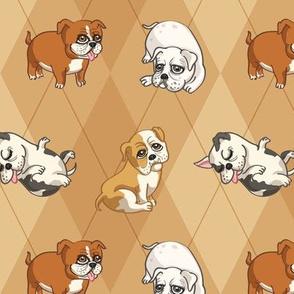 English Bulldogs (Tan)