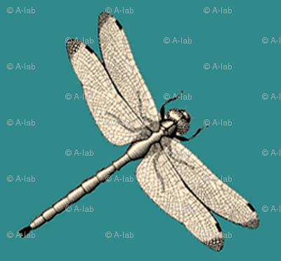 Dragonfly on teal