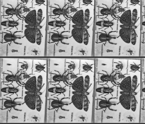 bugs fabric by farrarartdesigns on Spoonflower - custom fabric