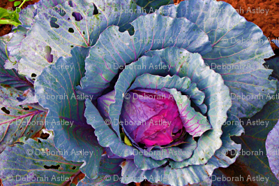 Head of Cabbage (large scale repeat)