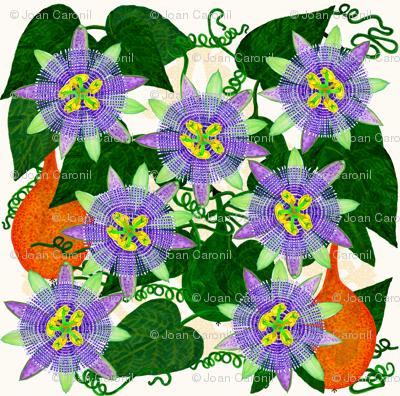 Passiflora ligularis