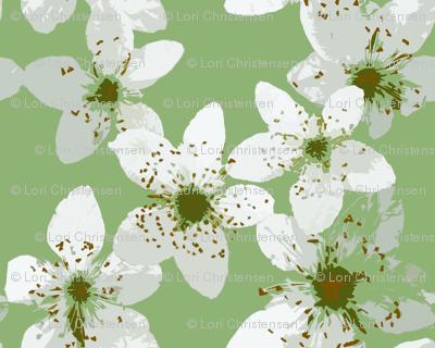 blackberry_blossom