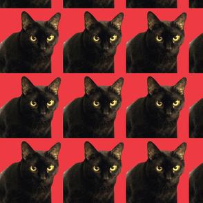 Velvet the cat 17 Red