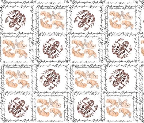 Bufo periglenes fabric by amandajoandme on Spoonflower - custom fabric