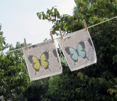 Blue Butterflies on Gray