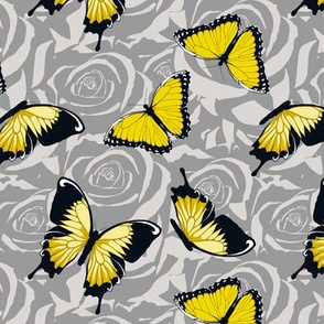 Small Yellow Butterflies on Gray