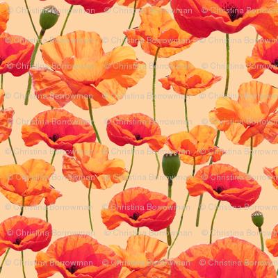 Wizard of Oz - Orange Poppies