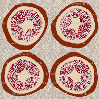 Four Pomegranates with pips