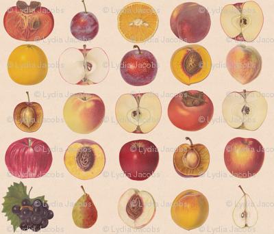 Vintage Fruit Assortment