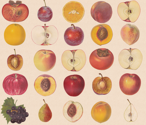Vintage Fruit Assortment fabric by lyddiedoodles on Spoonflower - custom fabric