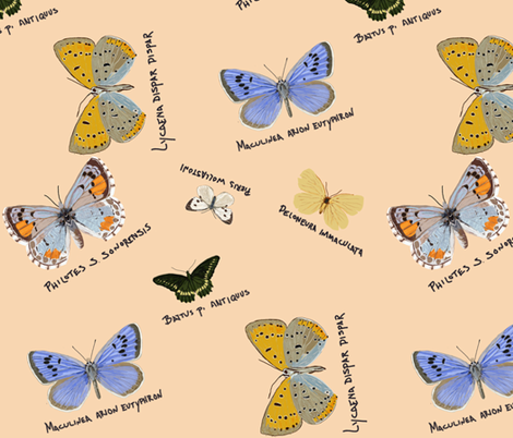 extinct butterflies fabric by j-andrew on Spoonflower - custom fabric