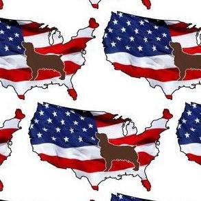 USA Patriotic Boykin Spaniel