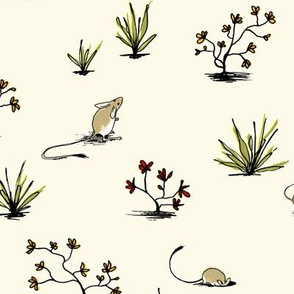 Long-tailed Hopping Mouse in Cream