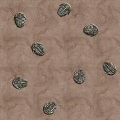trilobite vivid