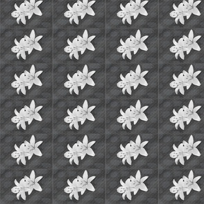Daylillies, Black and White