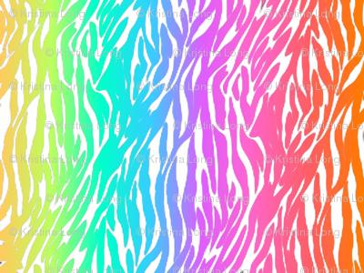 Zebra-rainbow_2
