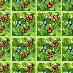 4 views of butterflies