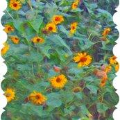 Rrsunflower_circle_resized_shop_thumb