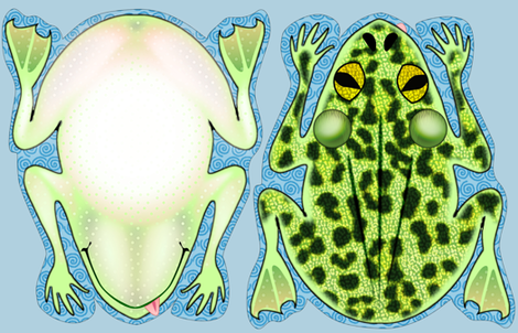 Frog Pillow Kit fabric by glimmericks on Spoonflower - custom fabric