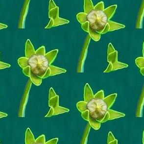 Spring Flower Bud