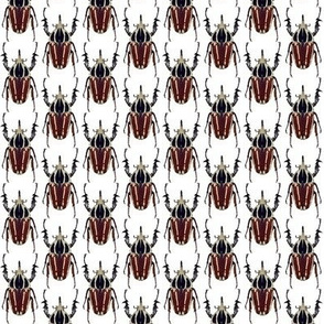 ugandensis beetle