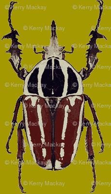 ugandensis beetle green