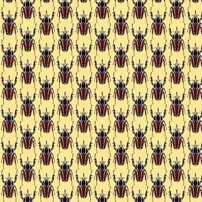 ugandensis beetle yellow