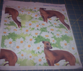 1258463_rr1258463_rrrseamless_italian_greyhound_and_daisies2jtp_comment_191104_thumb