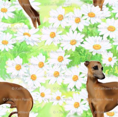 Italian greyhound and daisies fabric