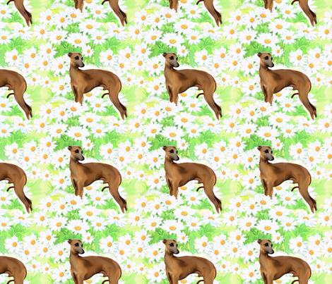 Italian greyhound and daisies fabric fabric by dogdaze_ on Spoonflower - custom fabric