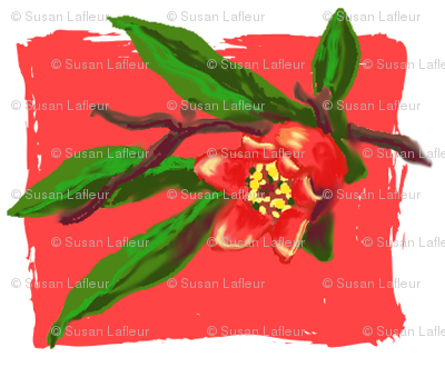 Pomegranate_Flower