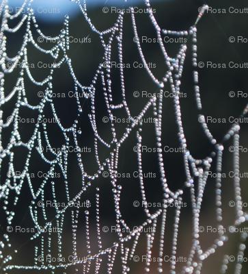 lace black webs