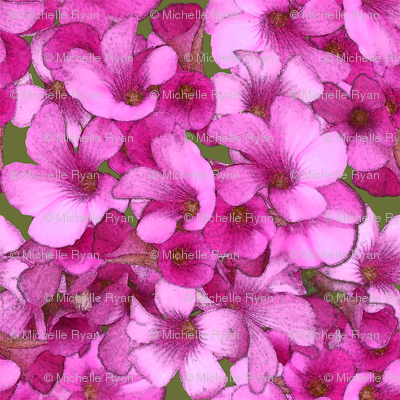 Pink Wood Sorrel - mini