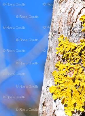 yellow lichen undulating