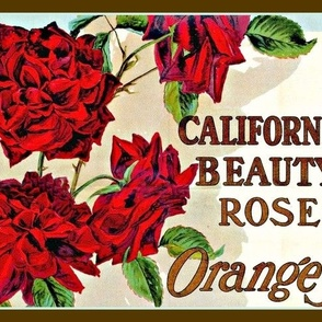 California Beauty Rose Oranges