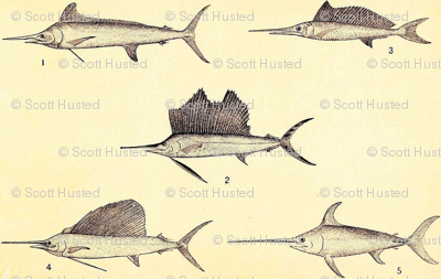 Swordfish & Sailfish