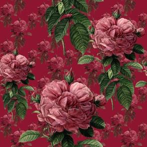 Redoute' Roses ~ Deep Rose ~ Medium