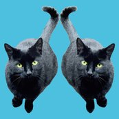Rrblackcat1_copy_shop_thumb