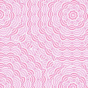 scallop_pinkwhite
