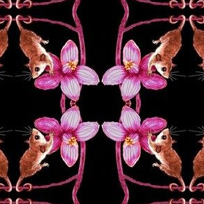 Tiny Australian Possum